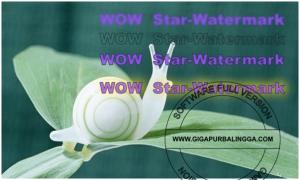 star-watermark-ultimate-v1-1-3-full-serial3-300x180-7229073