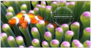 sim-aquarium-v3-8-60-full-patch1-300x159-2119056